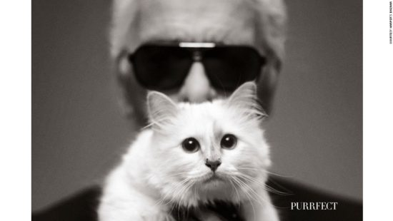 140923194300-choupette-4-horizontal-large-gallery